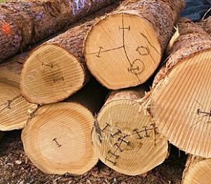 East Coast Exports LLC - Specialist of Wood Logs from North America